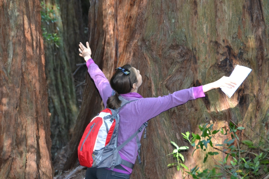 "Being  Redwood ""tree hugger"""