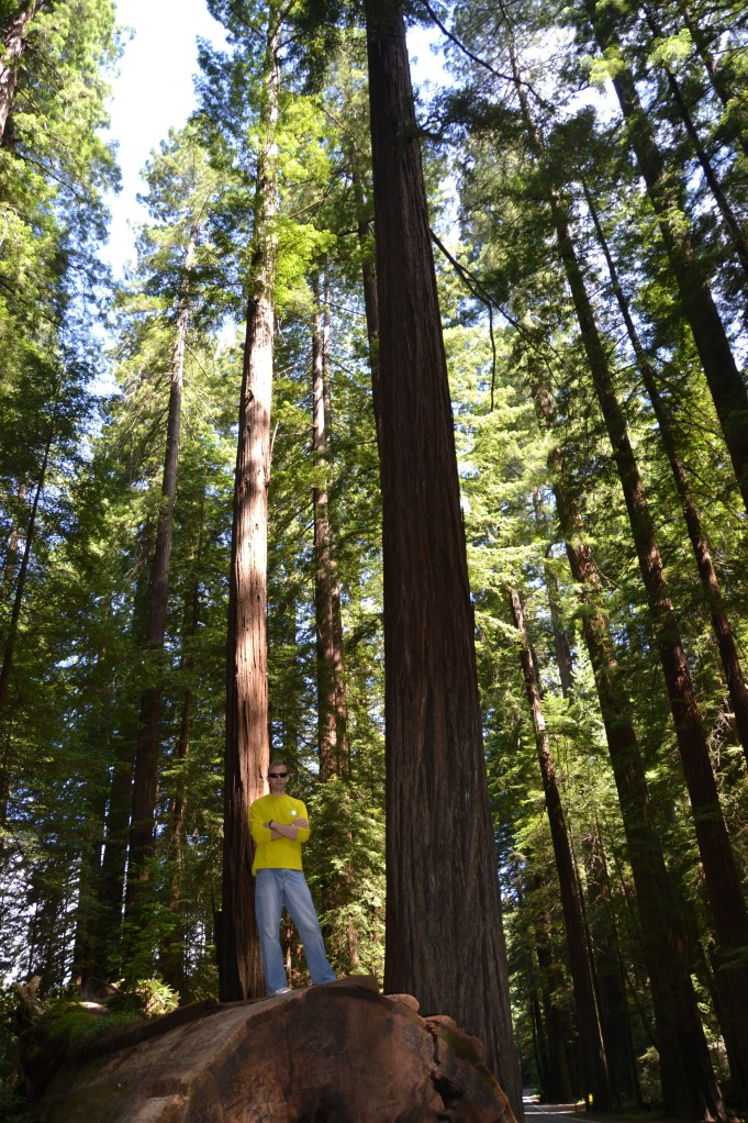 Dustin standing on a fallen Redwood along the Avenue of the Giants