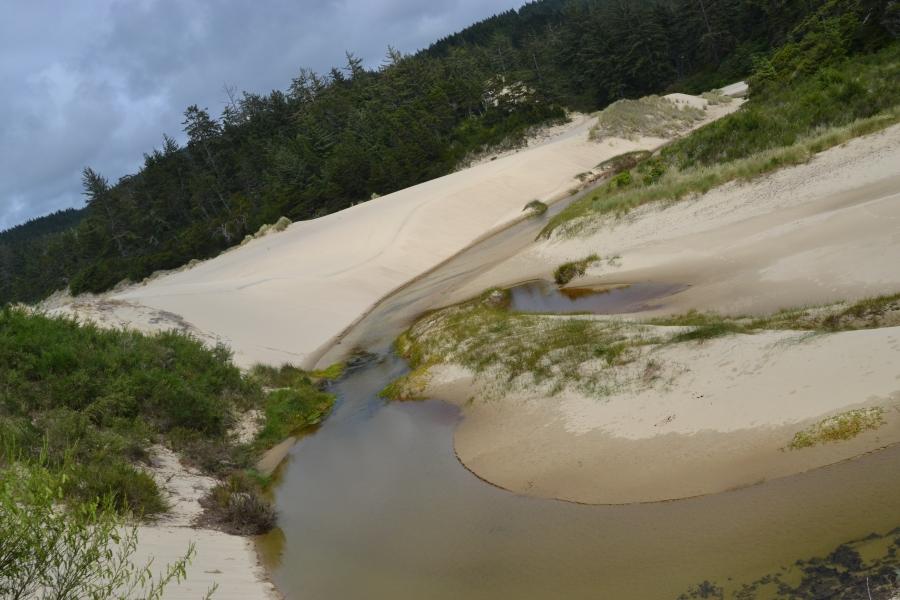 Sand Dunes near a creek