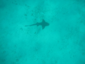 Shark! #TooCloseForComfort