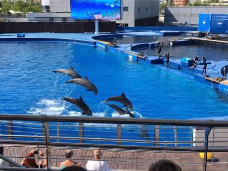 Dolphin show @ Oceanographic